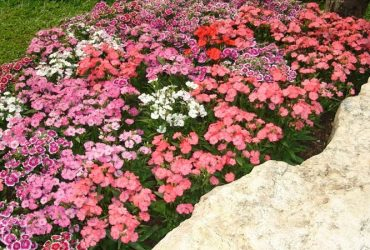 Floriculture: Seasonal Landscaping